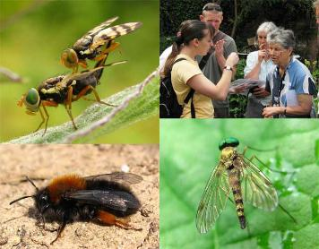 Shropshire entomology services - composite image